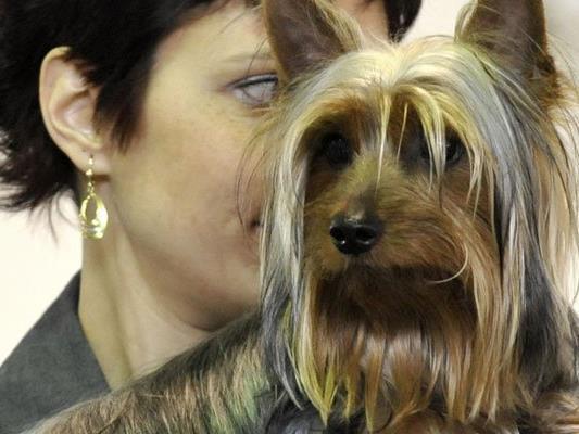 Eine 52-jährige Feldkircherin hatte heuer am 25. Mai während des Einkaufens in einem Lebensmittelgeschäft das eingewachsene Halsband beim Hund der Angeklagten entdeckt.