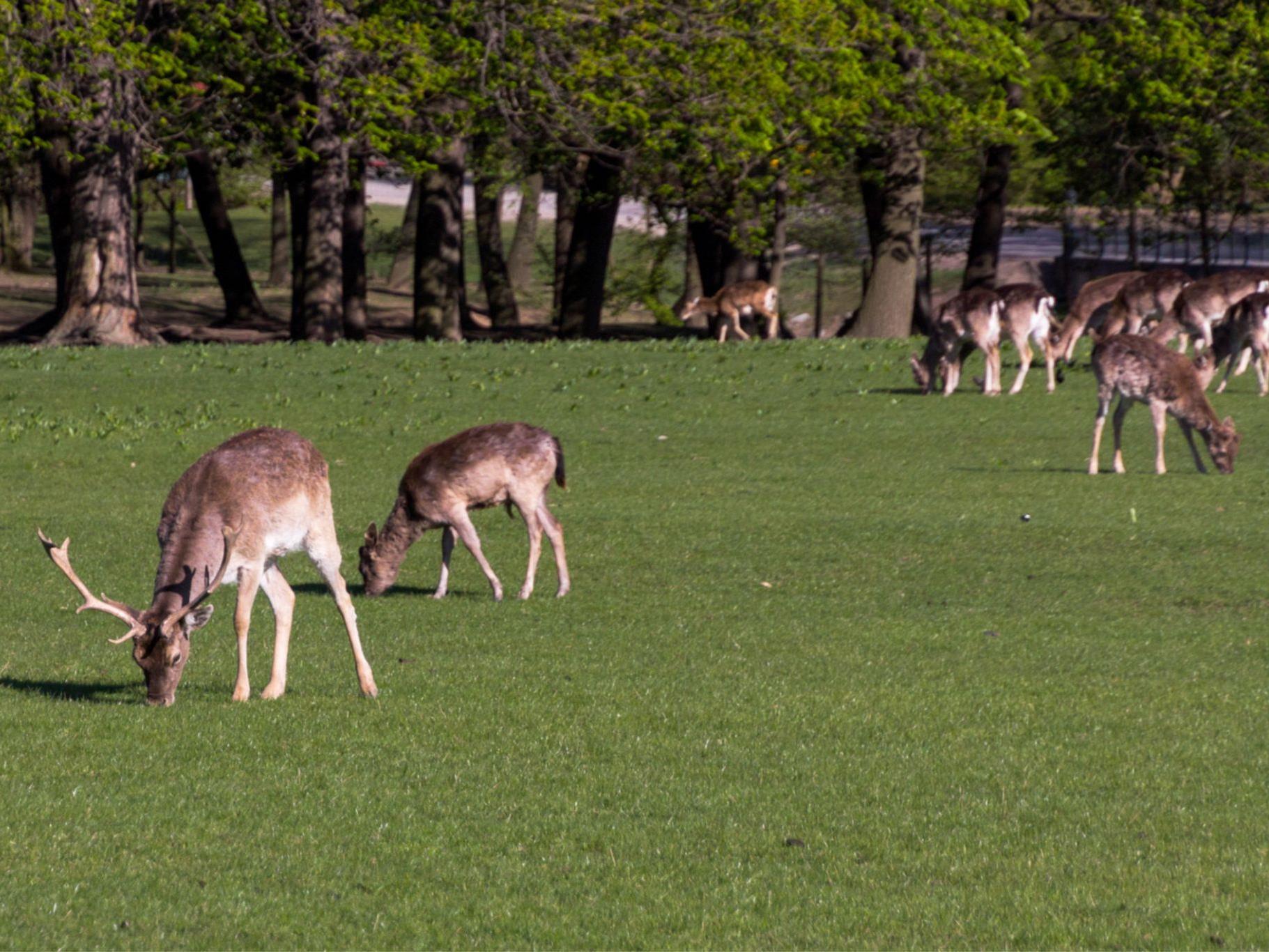 Ausflugstipp für das Wochenende: Der Lainzer Tiergarten - Sommer ...