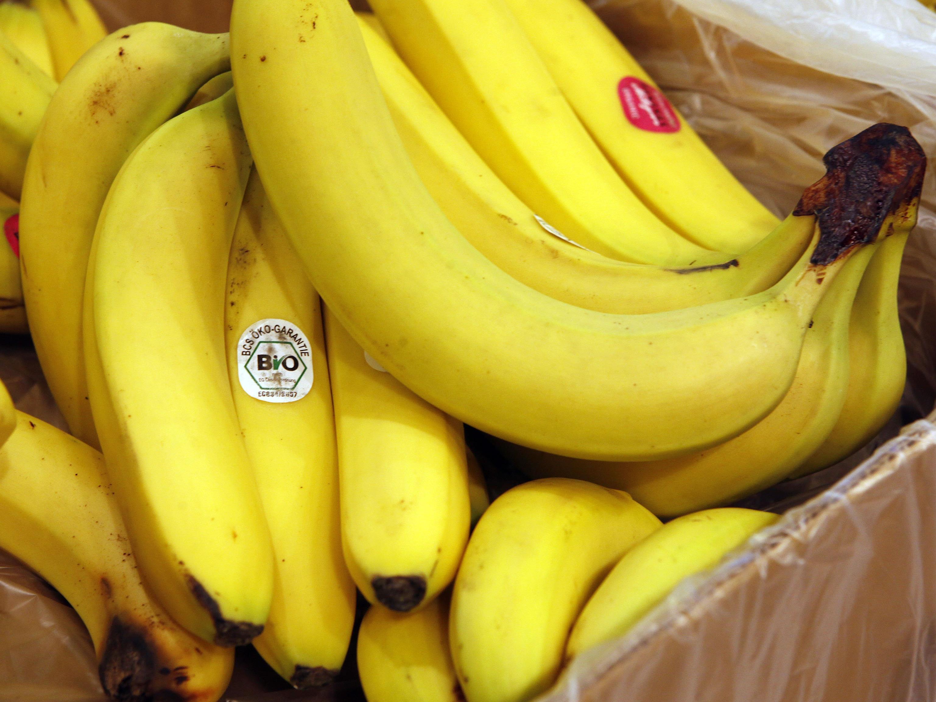 Das Tier versteckte sich in einer Bananenkiste.