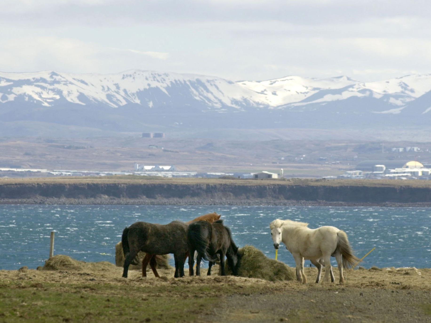 Island, das Land der Vulkane, Ponys .. und Elfen!
