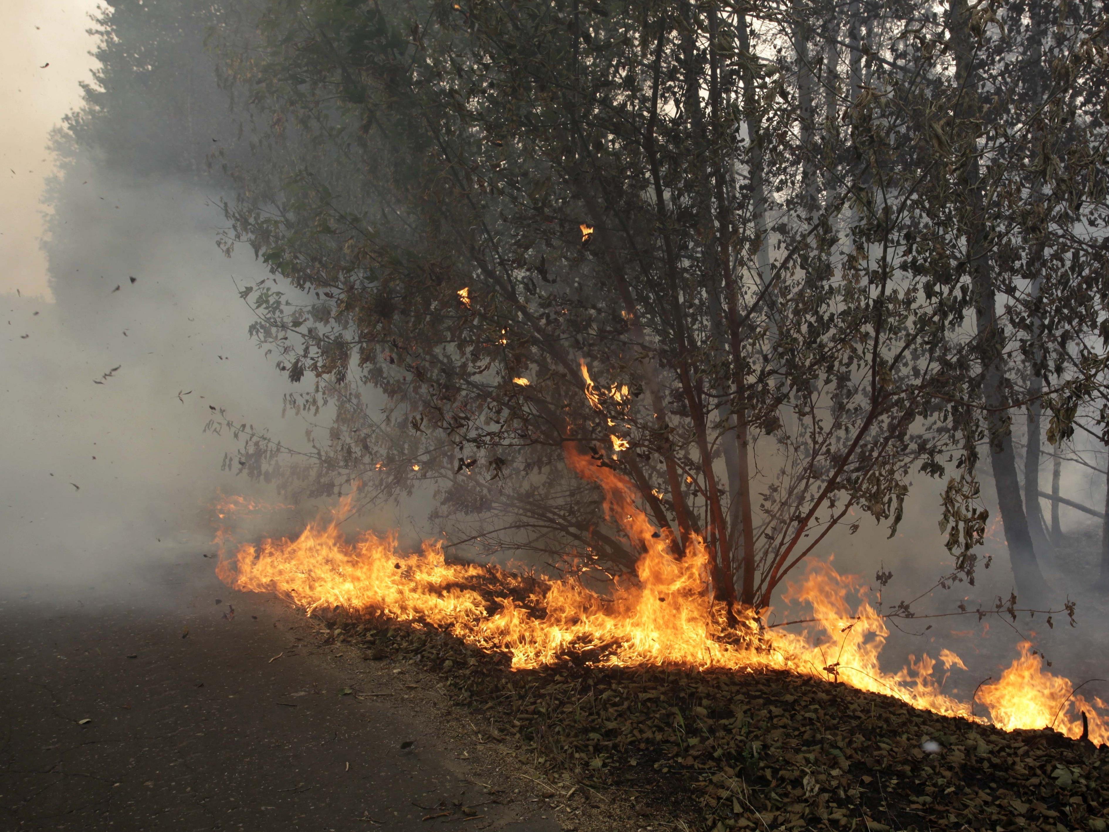 Der Deutsche löste den Waldbrand aus.