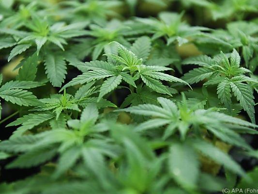 Pokemons führten Oberösterreicher zu Cannabis-Pflanzung