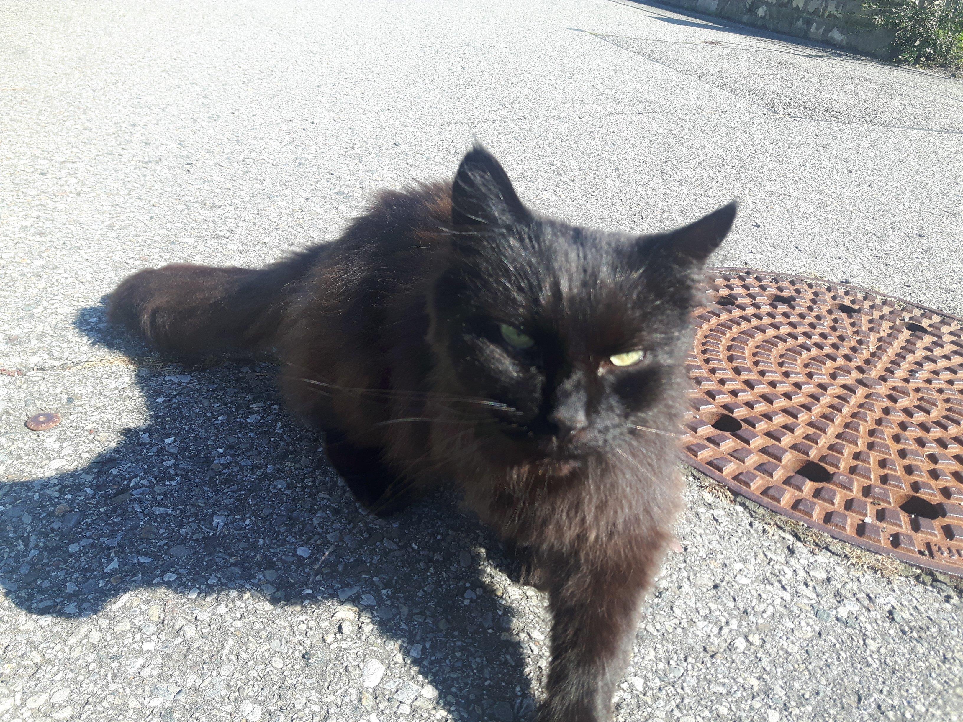 Langhaar Katze
