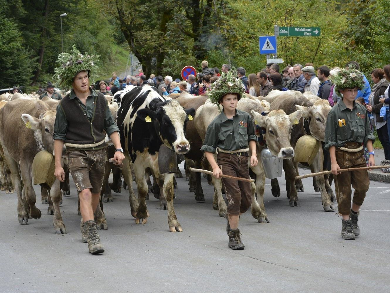 Immer ein besonderes Ereignis für Groß und Klein: Der jährliche Alpabtrieb von den Dornbirner Alpen.