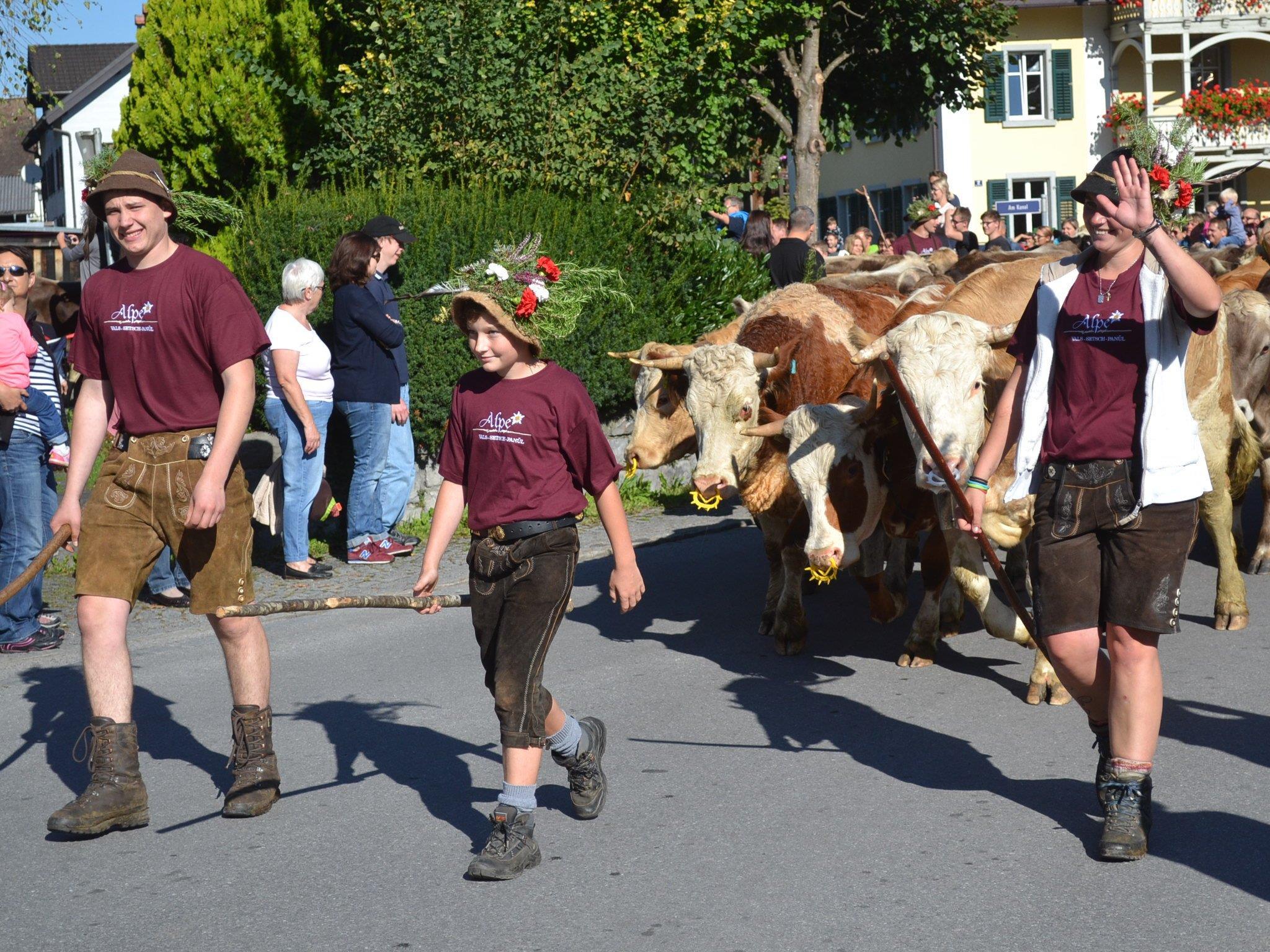 500 Rinder kehrten ins Tal zurück.