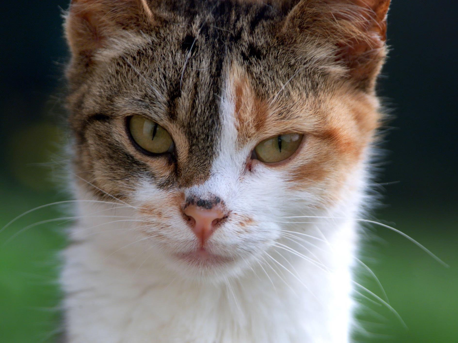 Einige Katzen haben mehr Follower auf Instagram als so manche Persönlichkeiten
