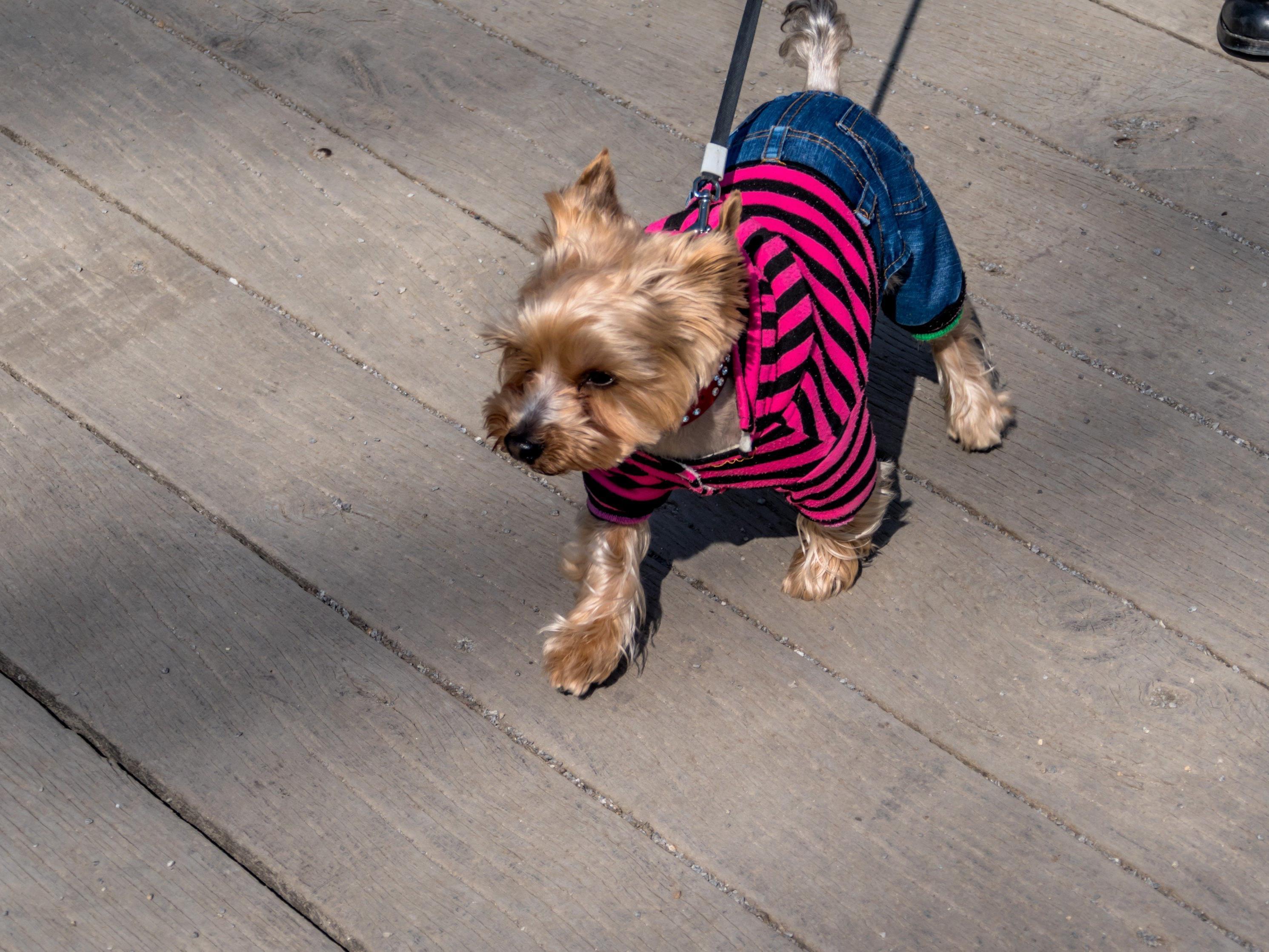 Illegale Einfuhr von Hunden ist ein großes Problem