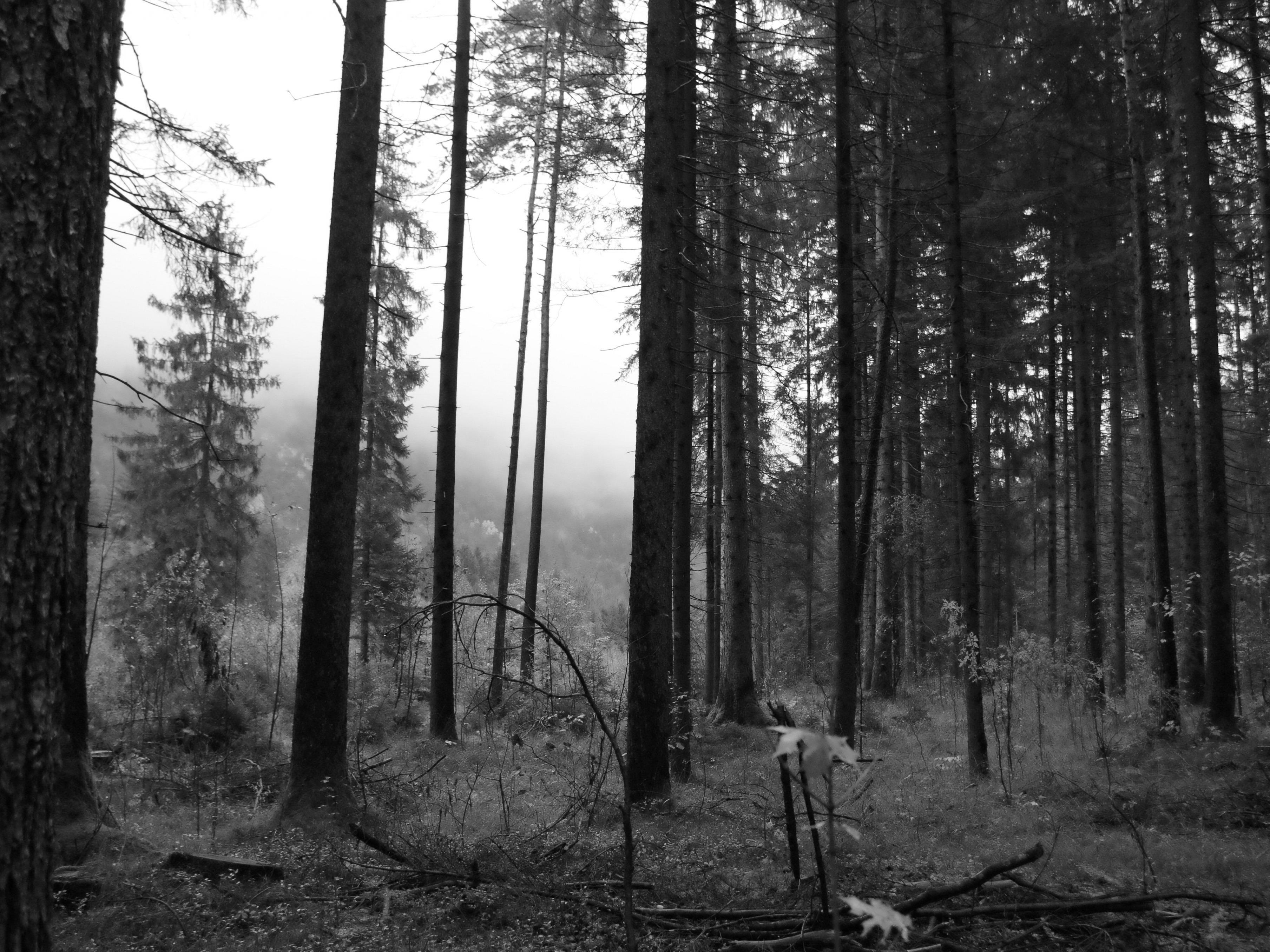 Mit der dunklen Jahreshälfte beginnt die Zeit der Geister.