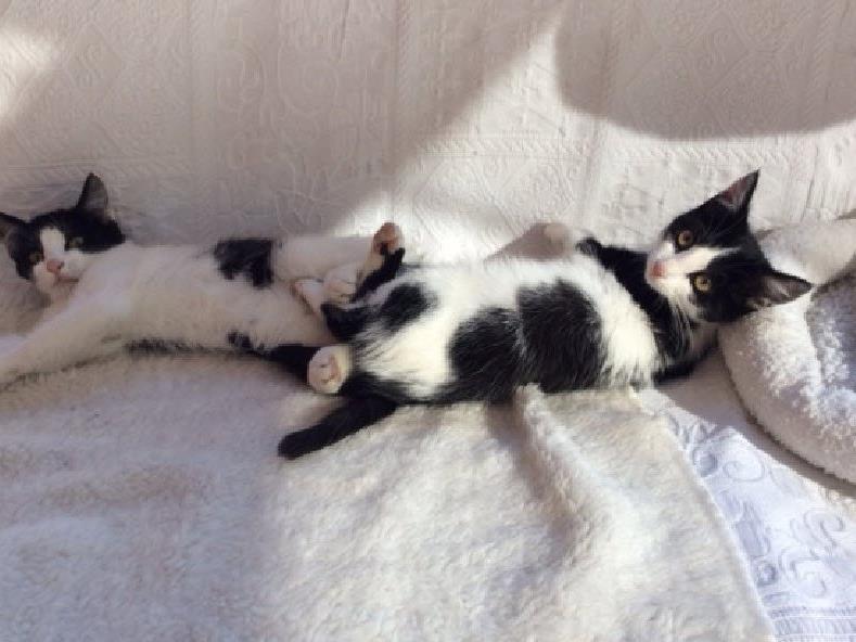 Wer sich für die Kätzchen interessiert kann sich gerne melden