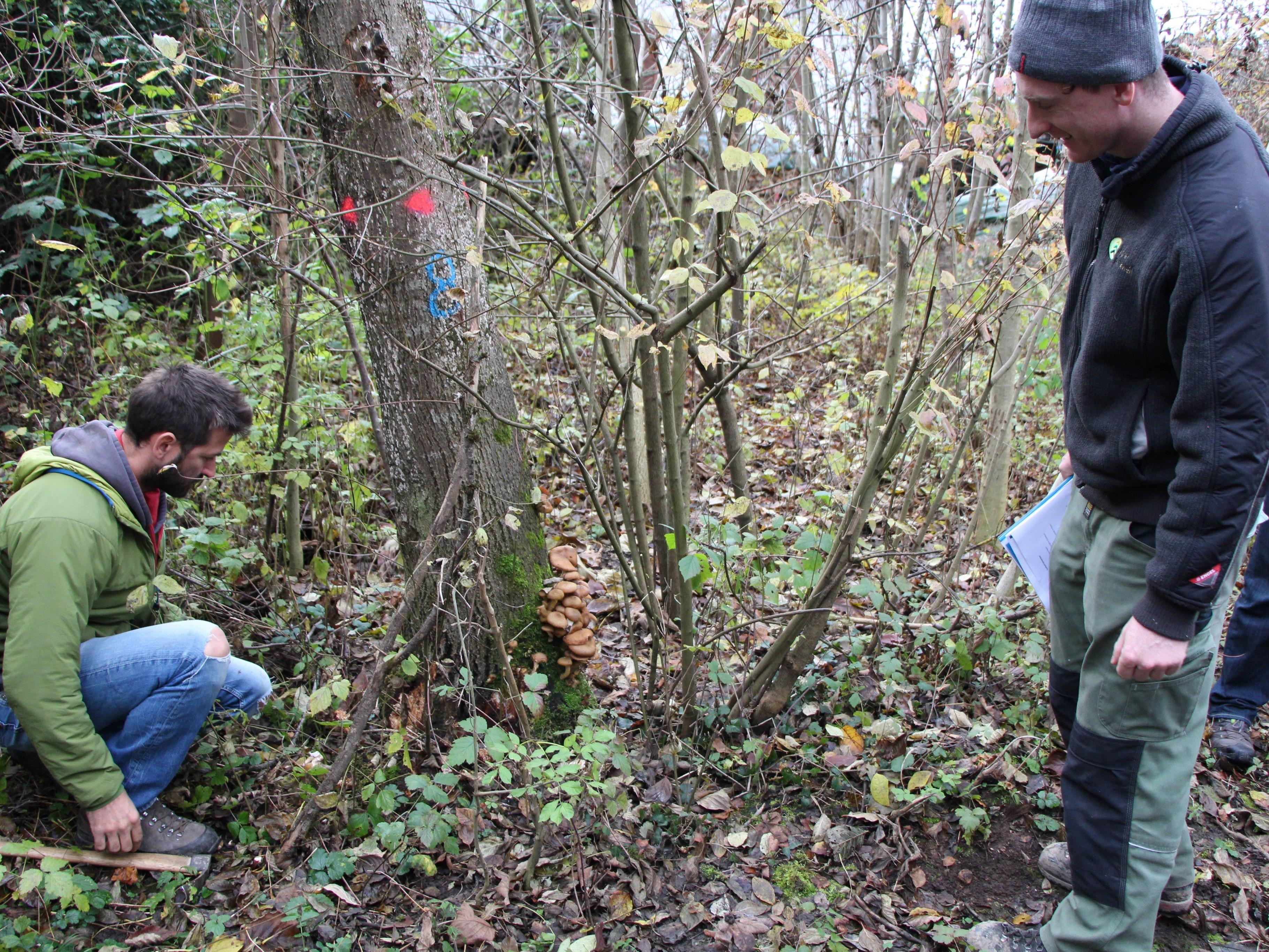 Exkursion zu kranken Eschen im Auwald