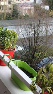 Nicht alle Balkonpflanzen müssen drinnen überwintern.