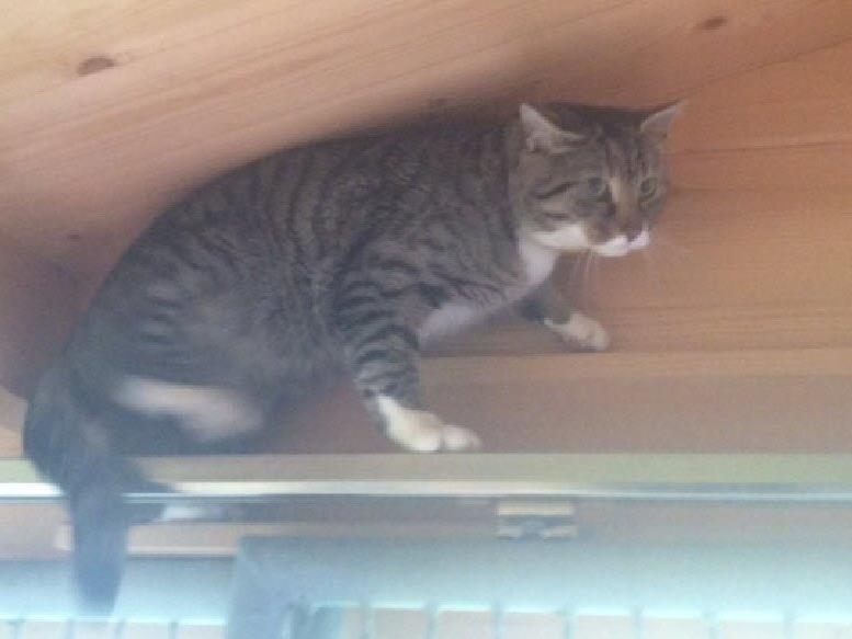 Dieses Kätzchen sucht seine Familie