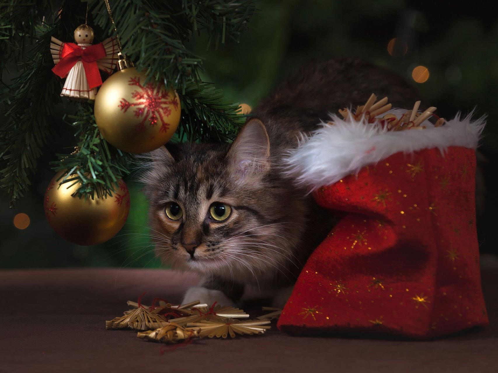 Weihnachtsgeschenke Keine Idee.Zoofachhandel Warnt Vor Tieren Als Weihnachtsgeschenk Kein