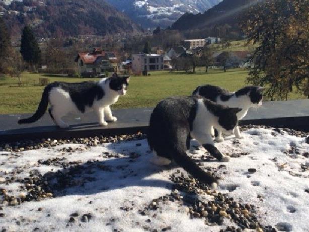 Die Kätzchen sind entwurmt, entfloht und stubenrein