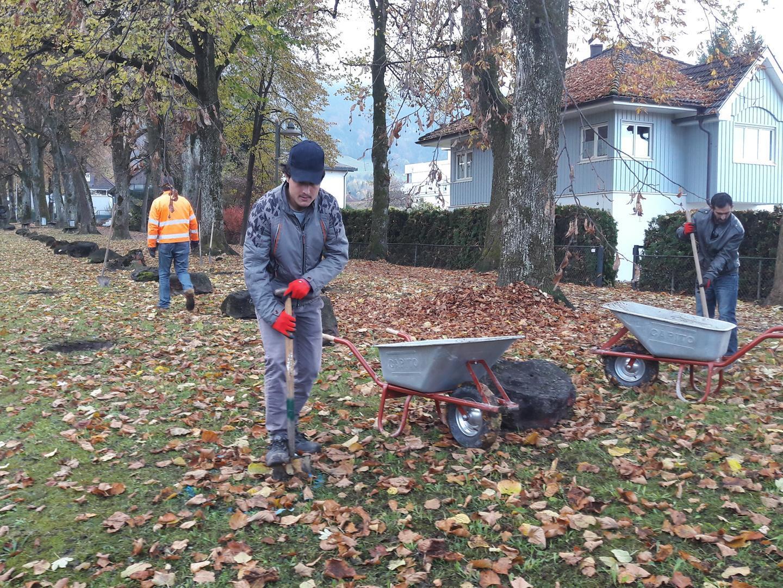 In Hohenems wohnhafte Flüchtlinge leisteten die Vorarbeit.