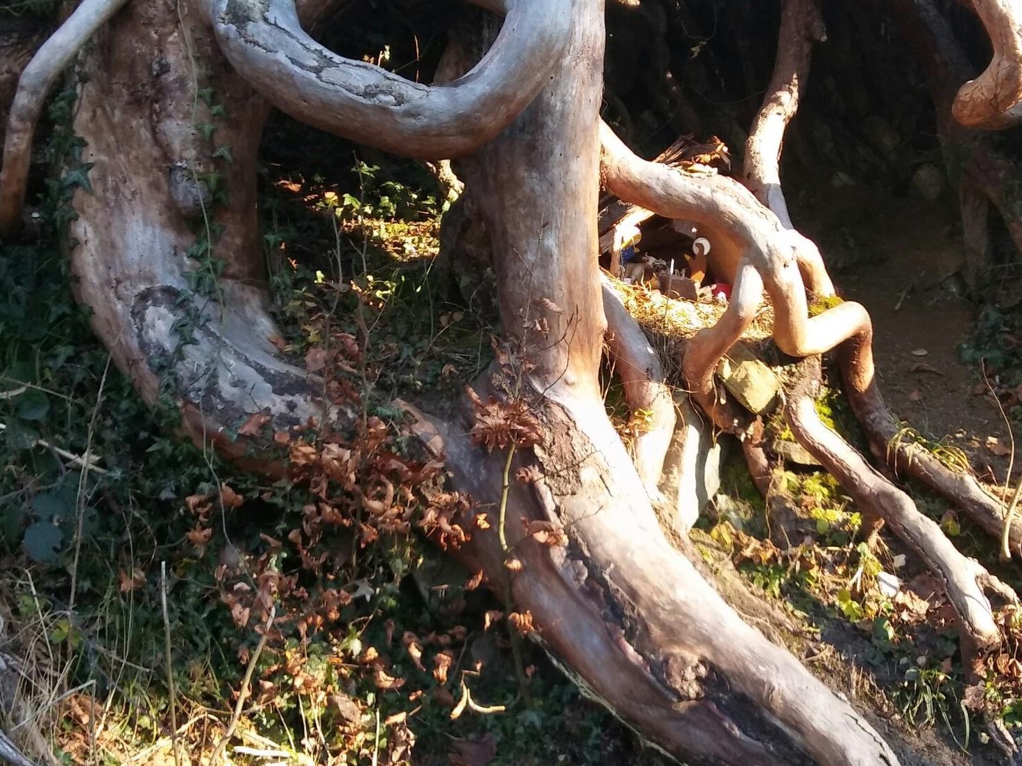 Die Krippe befindet sich in einem alten Wurzelstock am Wegesrand nach Eschenau.