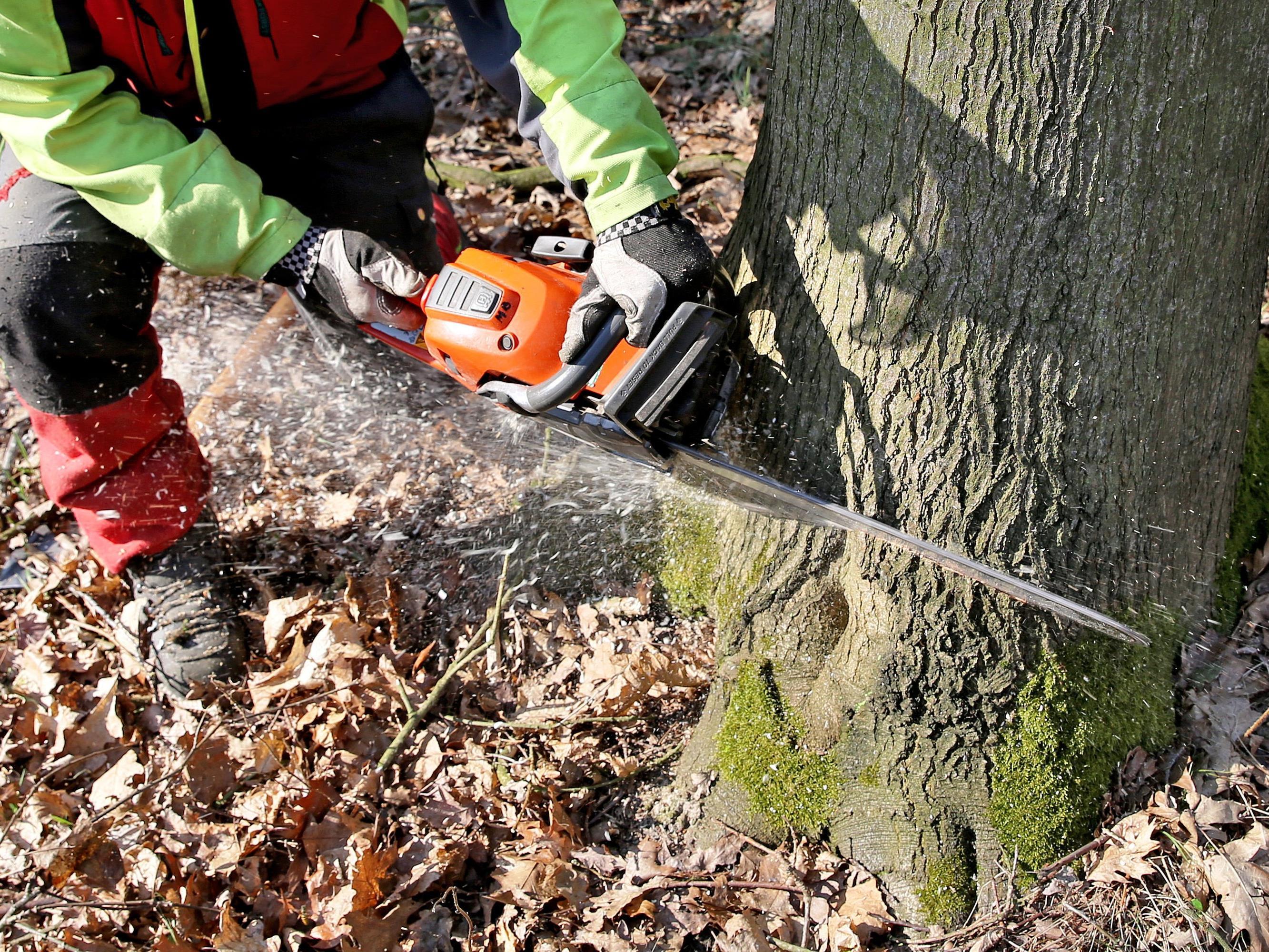 Über die Martin Holz GmbH wurde am Donnerstag am Landesgericht Feldkirch das Konkursverfahren eröffnet.
