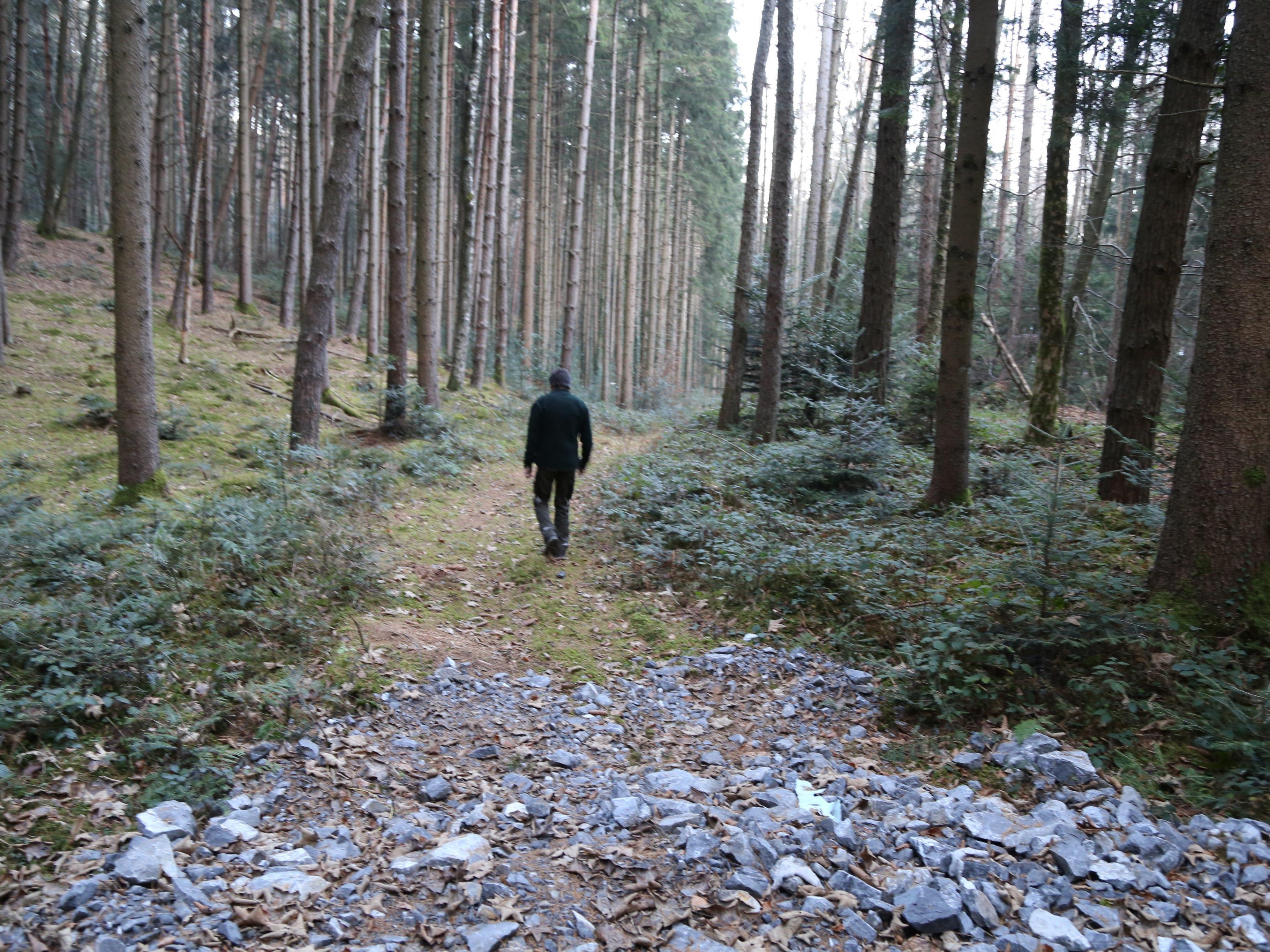 Hier entsteht der rund 580 Meter lange Köhrweg. Befallene Bäume sollen entfernt werden.