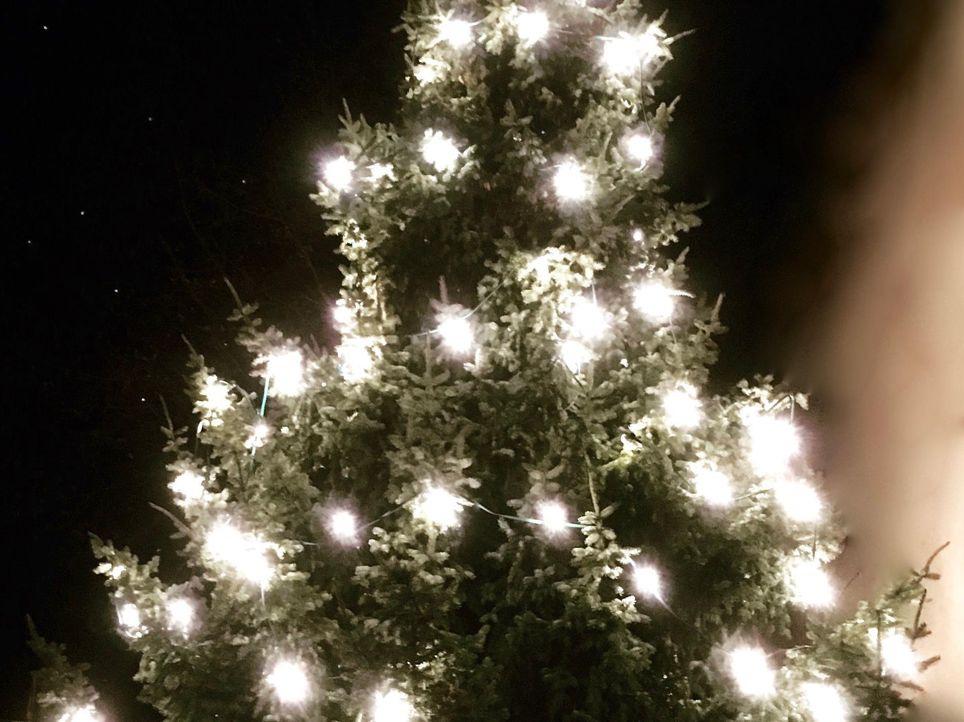 Leuchtende Weihnachtsbäume in Frastanz für einen guten Zweck