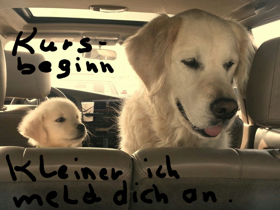Frühjahrs-Hundeerziehungskurs Bregenz 2017