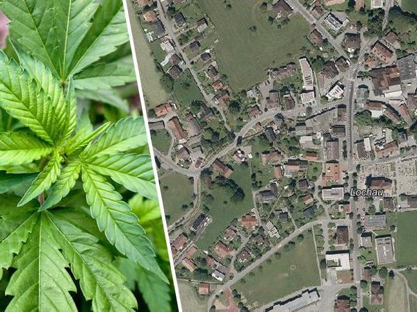 In den Wohnungen eines 67-jährigen Pensionisten und seines 44-jährigen Sohnes stellte die Polizei mehr als 1,8 kg Cannabis sicher.
