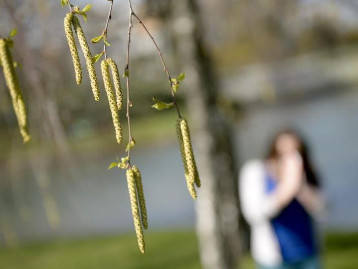 Die Pollensaison hat wieder begonnen