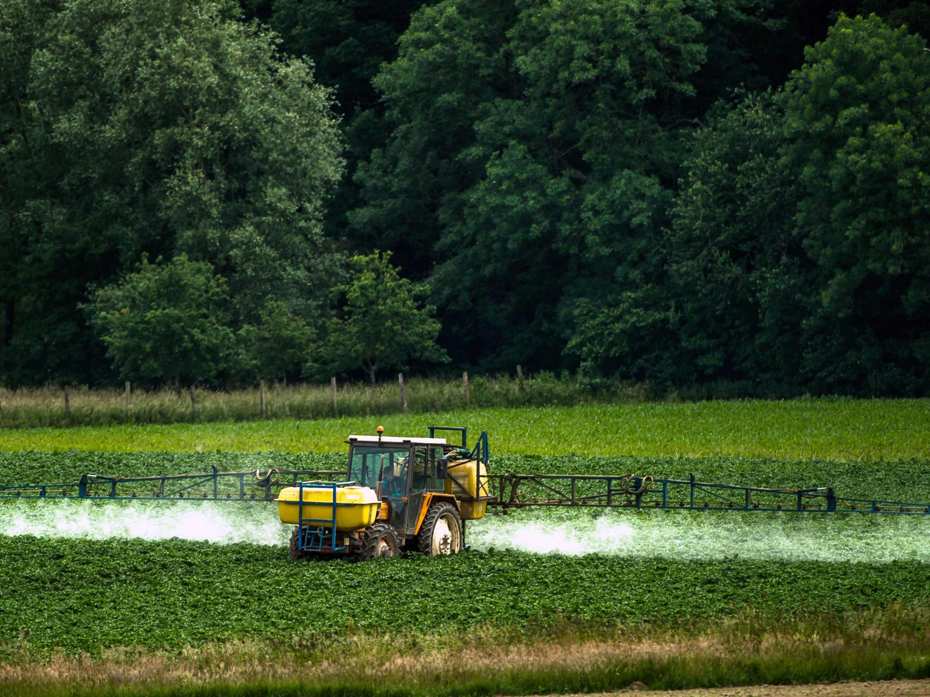 In Sachen Glyphosat ist sich die Landesregierung uneinig.