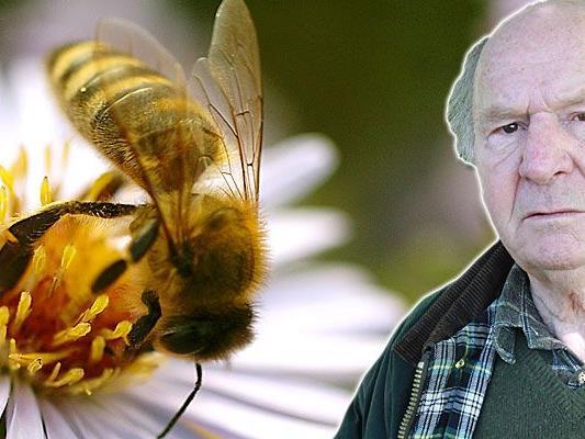 Imker-Obmann Egon Gmeiner geht von 5000 toten Bienenvölkern aus.
