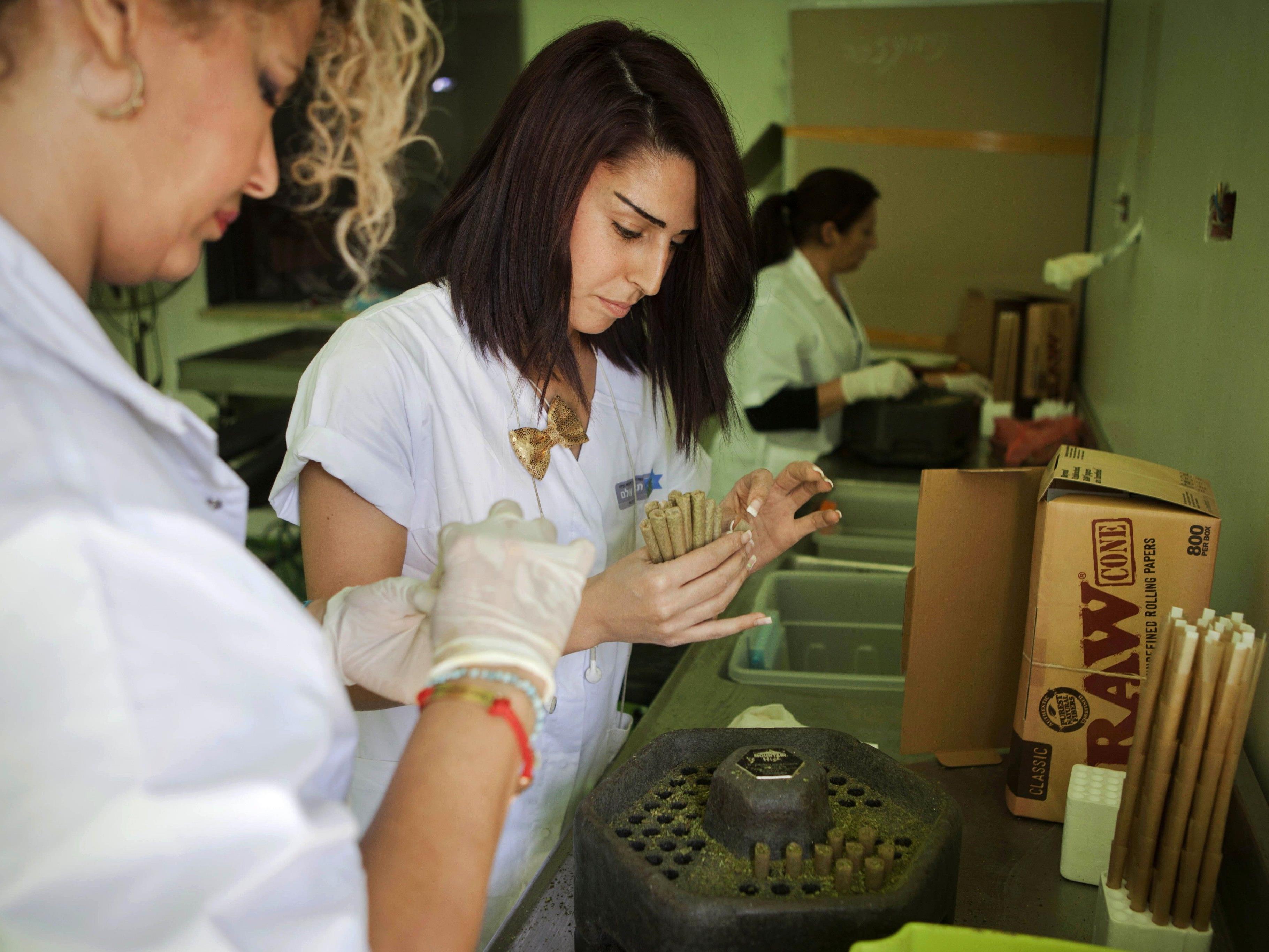 """Israelische Frauen bei der Arbeit auf der """"Tikkun Olam Medical Cannabis Farm"""" nahe der Stadt Safen in Israel"""