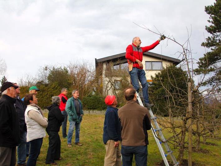 """Gottfried Gangl demonstrierte an Äpfel- und Birnenbäumen, wie diese im Frühjahr richtig geschnitten und somit """"erzogen"""" werden."""