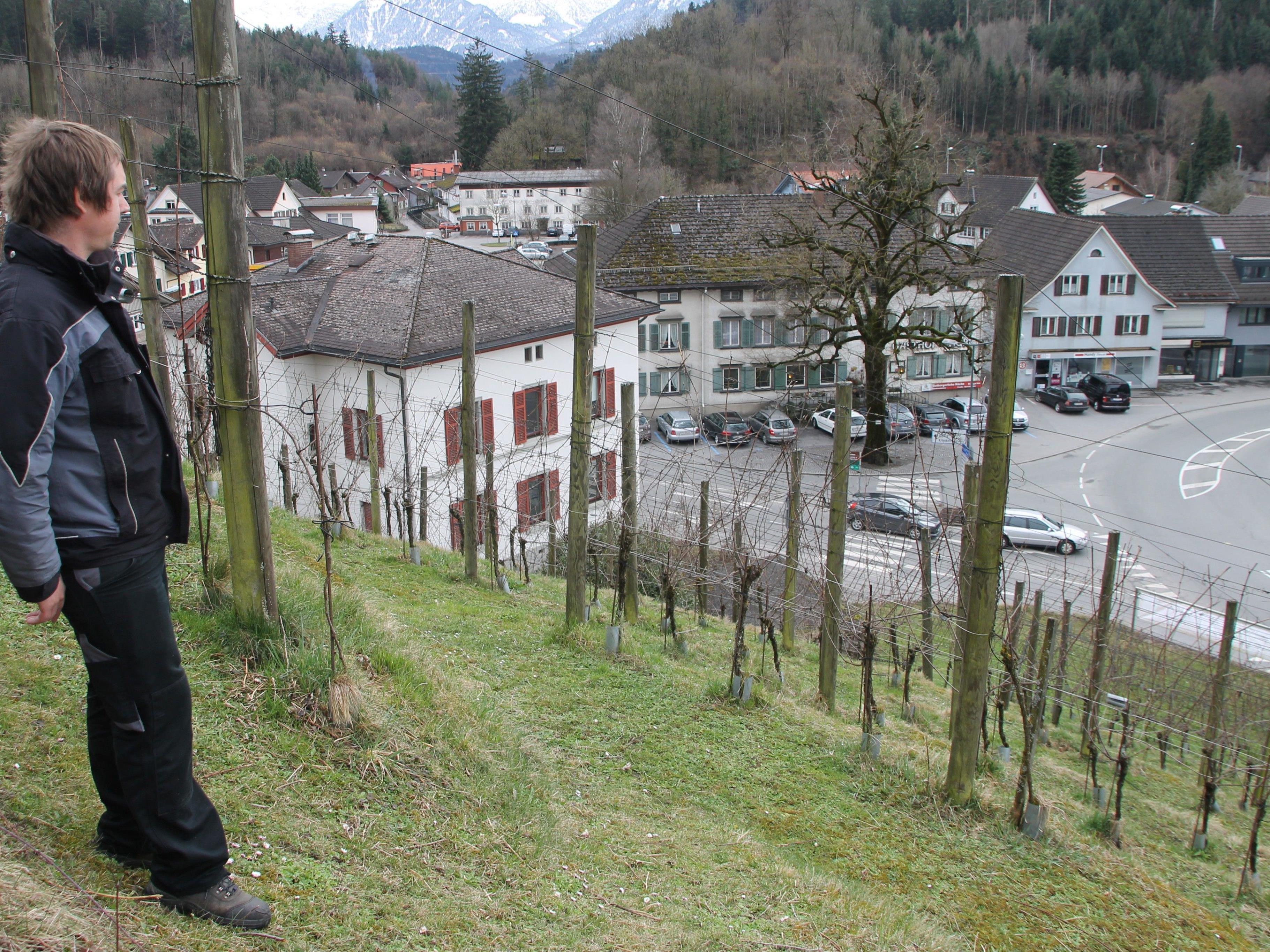 Michael Nachbaur baut Bio-Wein an der Basilika an.