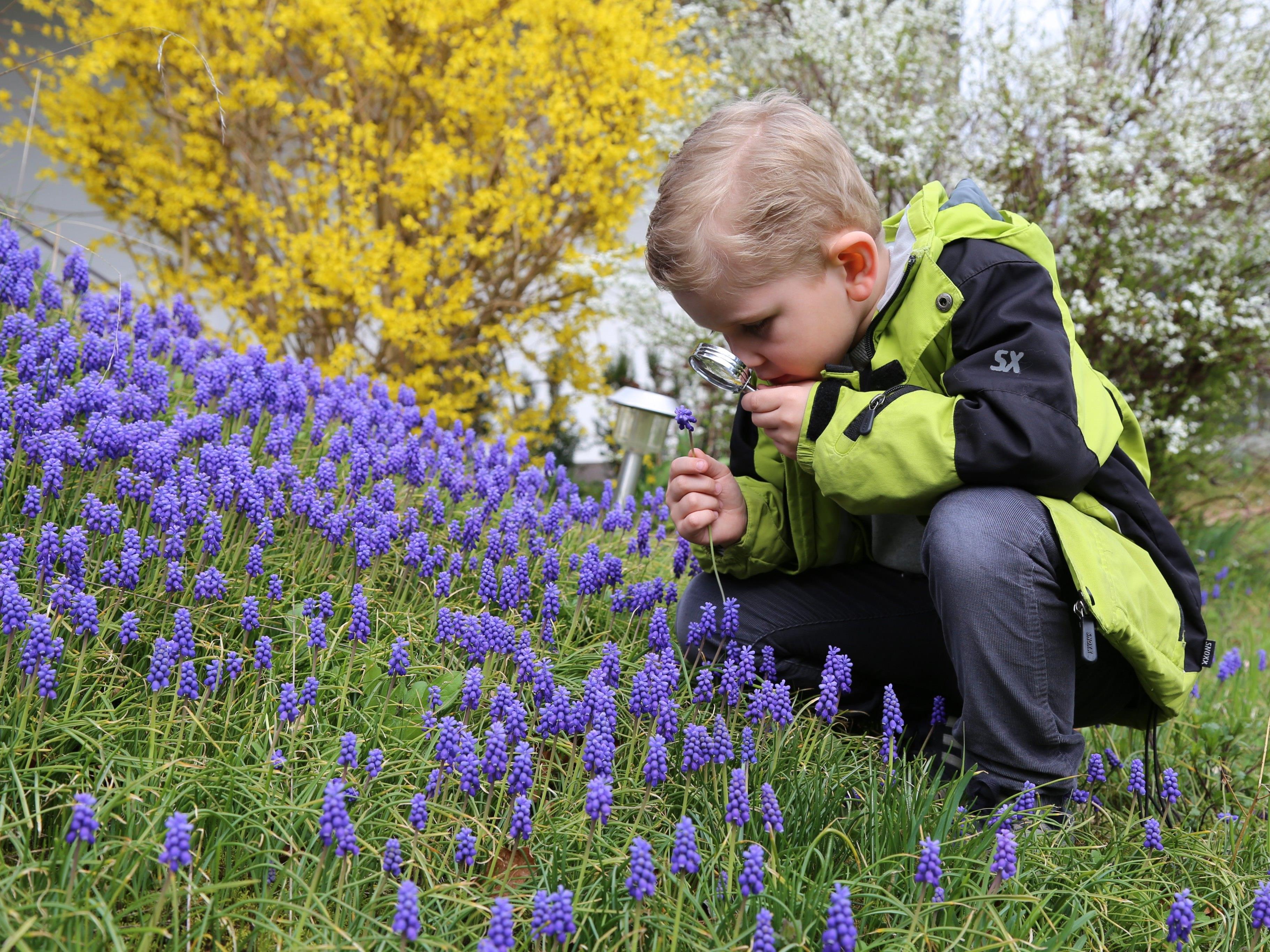 Nachwuchsforscher Jason Durell nimmt die Blumenwiese unter die Lupe.