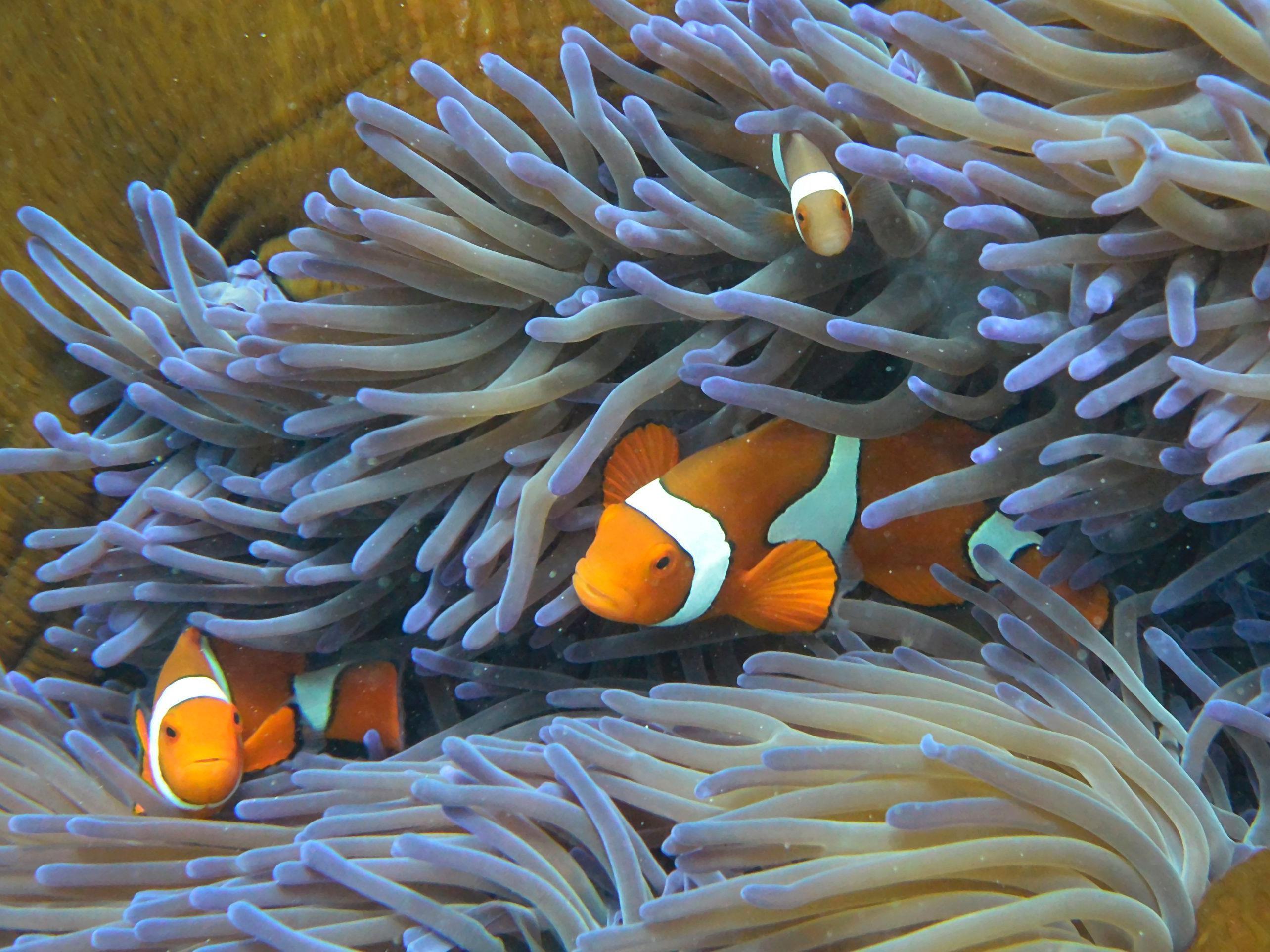 Das Leben im Great Barrier Reef schwindet.