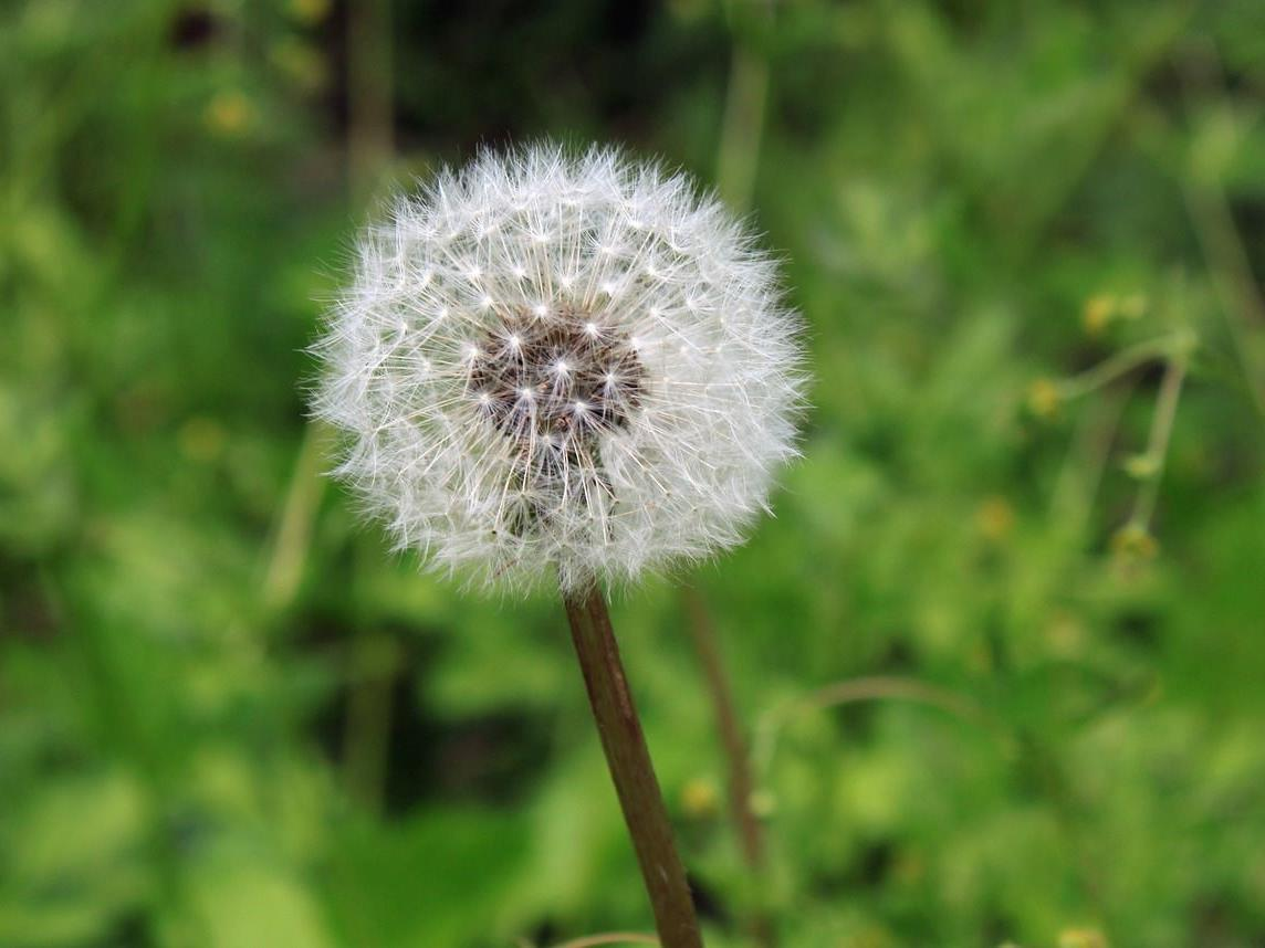 Vorschau auf die Pollensaison 2017.