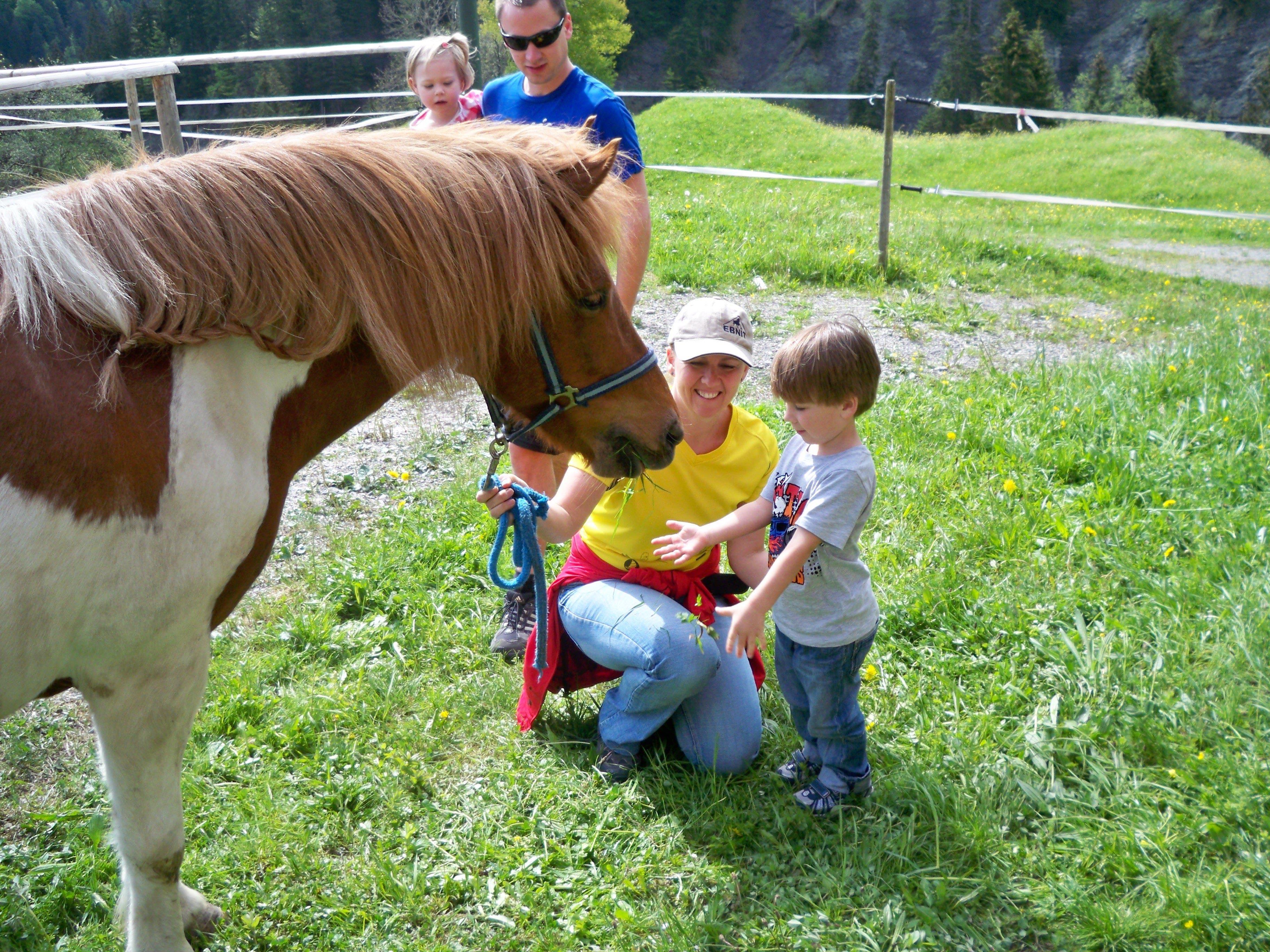 """Beim """"Pferdetag"""" im Ebnit kann man die Islandponys einmal ganz nahe kennenlernen und natürlich reiten!"""