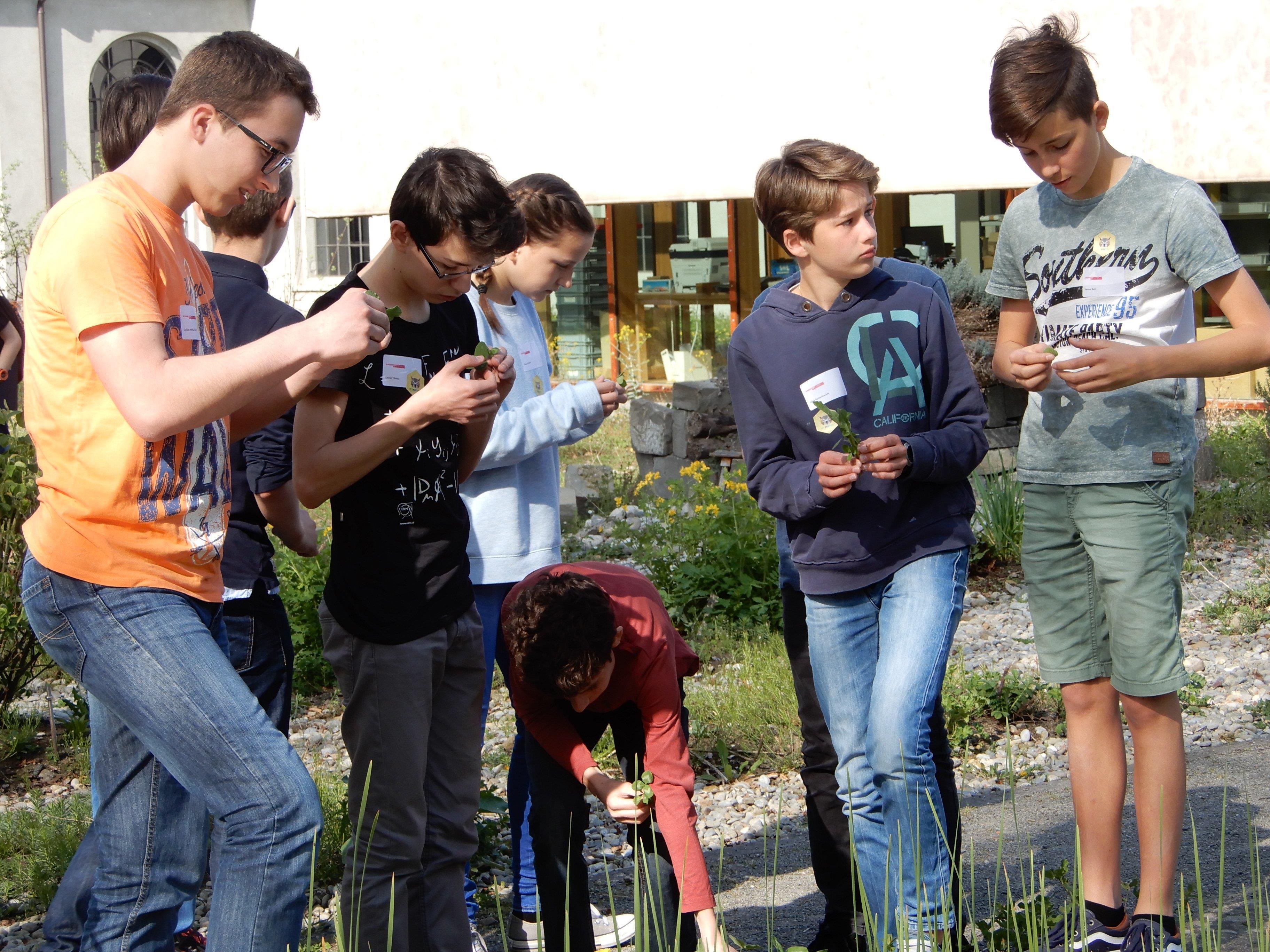 Im Garten der inatura machten sich die jungen Nachwuchsforscher auf die Suche nach Pflanzen für ihren nächsten Versuch.