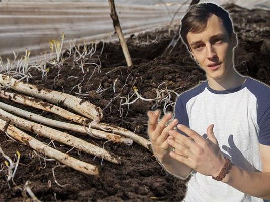 Lukas Elbs aus Hohenweiler pflanzt Spargel an.