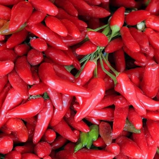 Chili ist scharf und hilft beim Kalorien verbrennen.