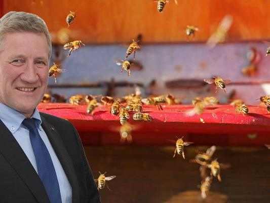 Das Land unterstütz die Imkereiverbände in Vorarlberg im Kampf gegen das Bienensterben.