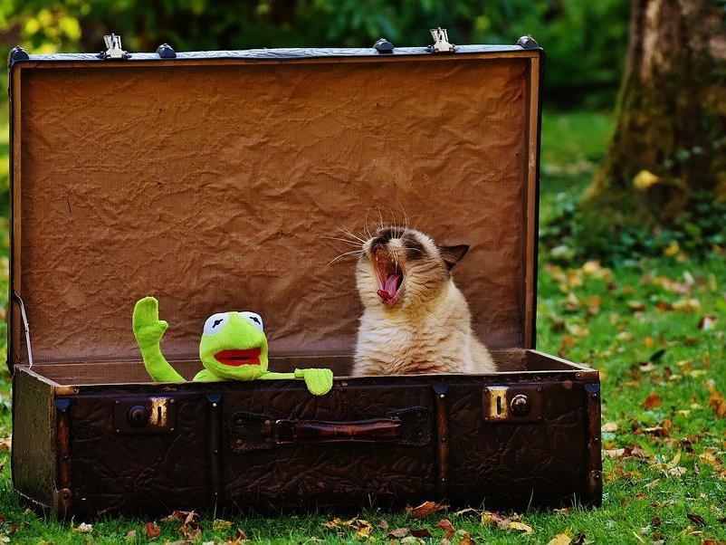 Die ganze Welt in einem Koffer!