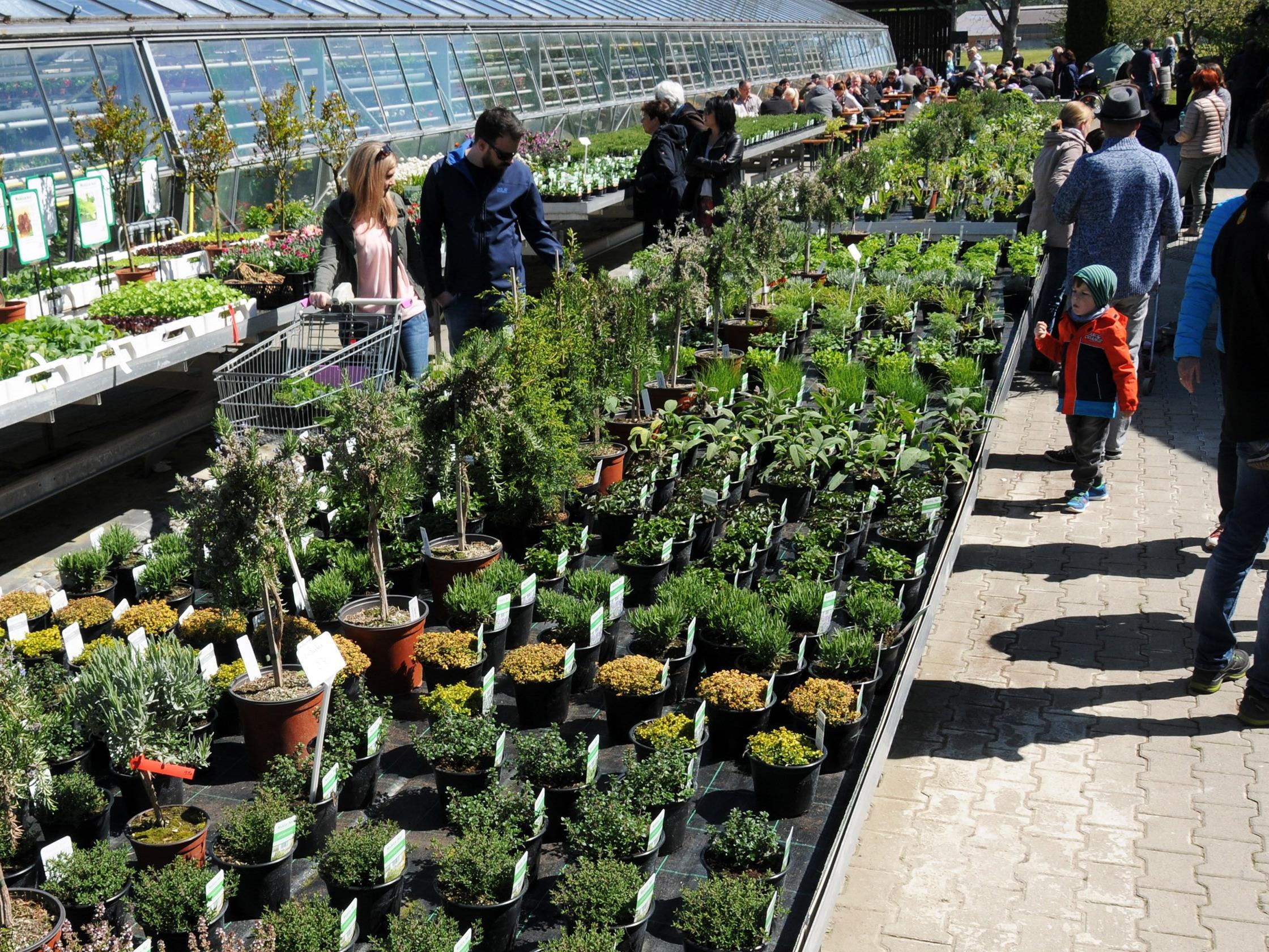 Große Auswahl an Blüten und Pflanzen am Mahlerhof Höchst