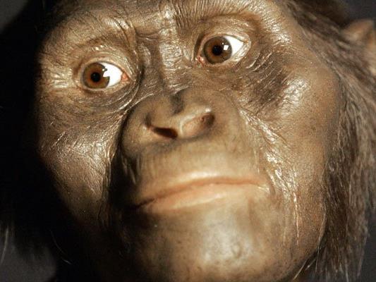 """Bisher war davon ausgegangen worden, dass die Wiege der Menschheit in Afrika liegt. Im Bild der Australopithecus Afarensis """"Lucy""""."""