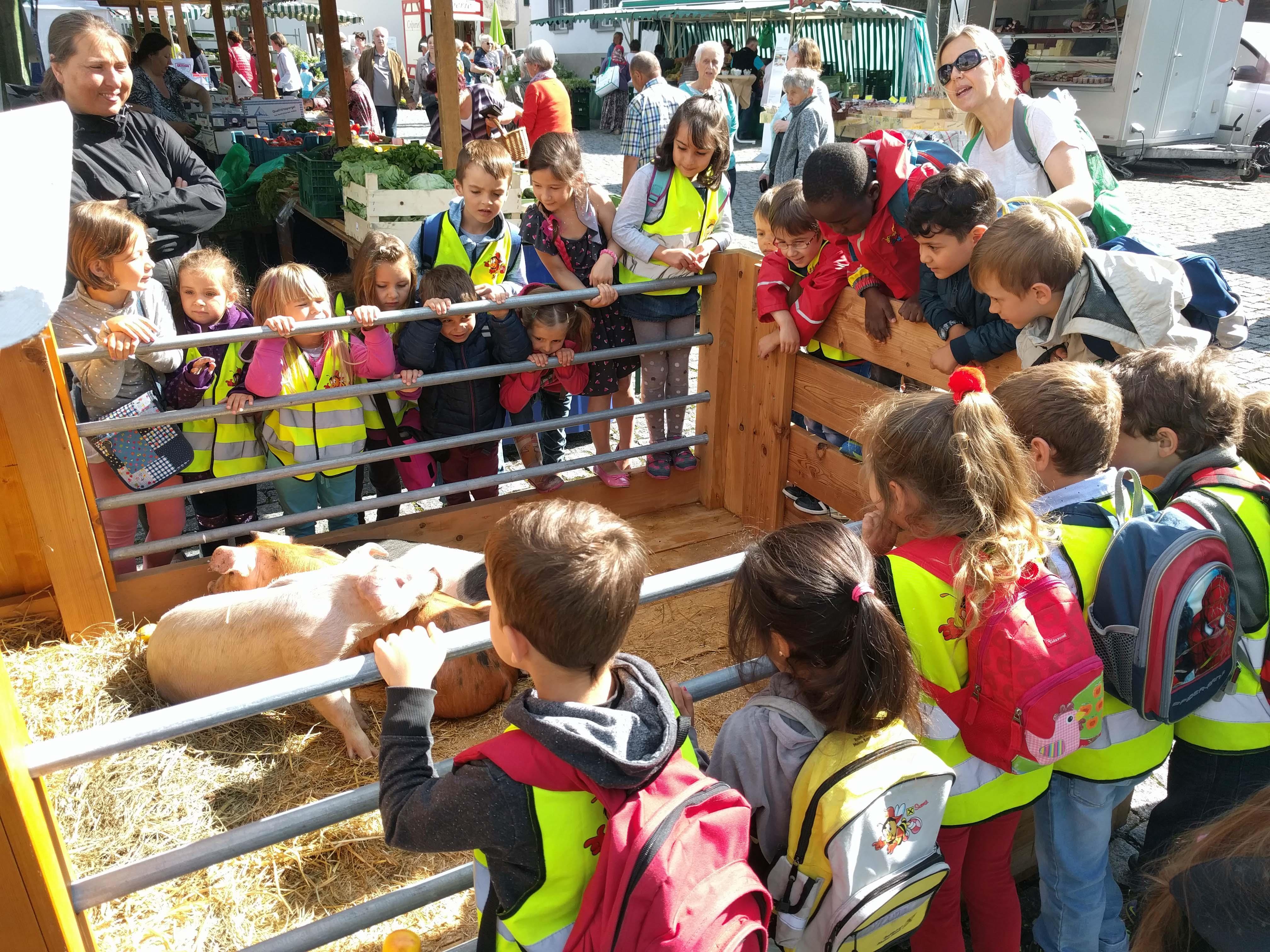 Die Kinder waren besonders begeistert von den Ferkeln des Ringelschwanzschweins.