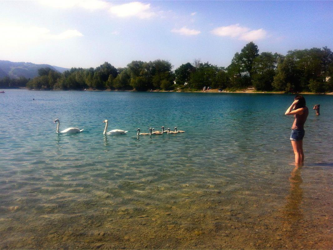 Wasservögel und Badegäste treffen am Paspelssee aufeinander. Das Füttern sollte aber unterlassen werden.