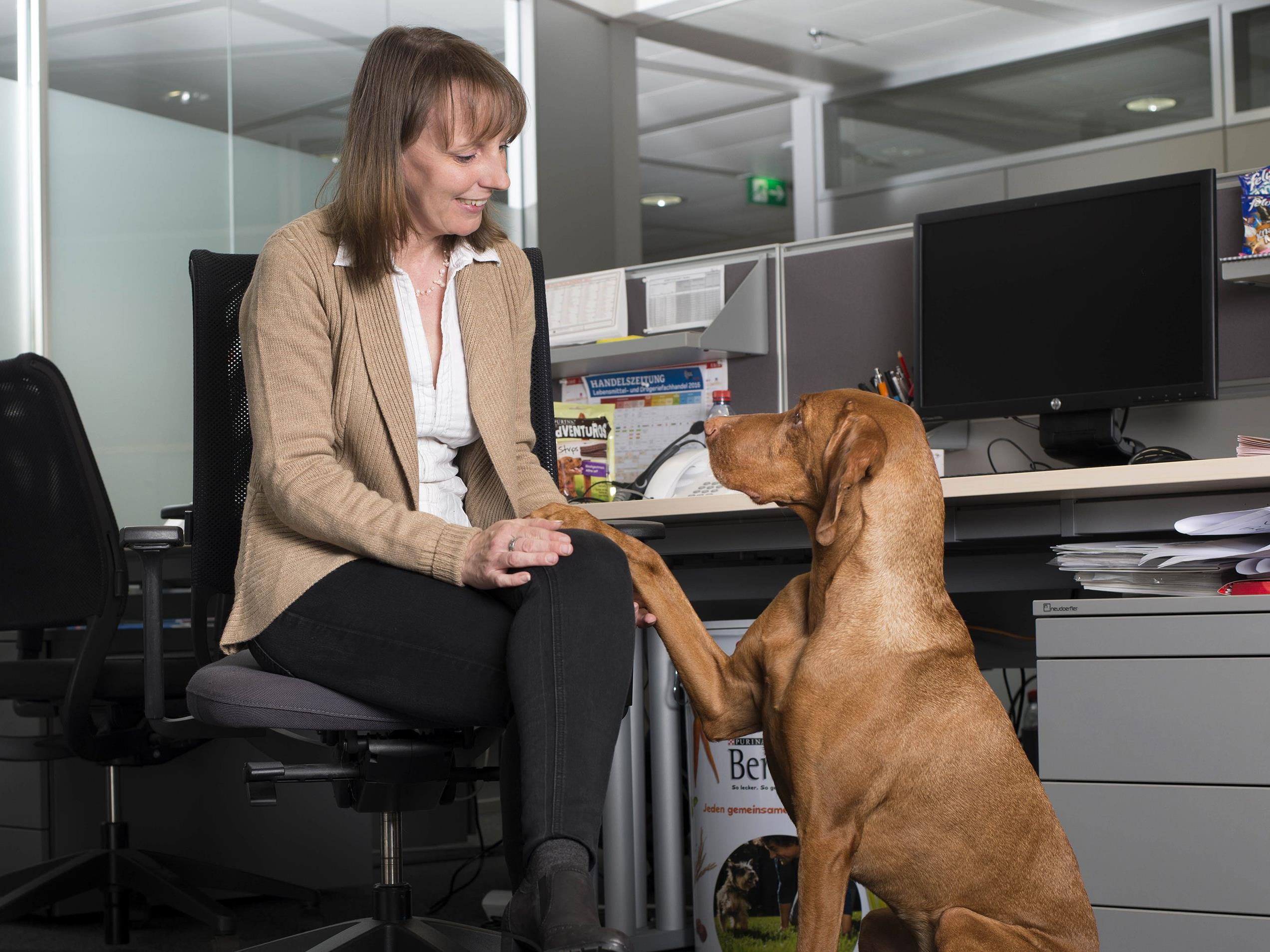Nicole Buchberger, Purina Breeder Specialist, hat ihre Magyar Vizsla-Dame jeden Tag im Büro mit dabei