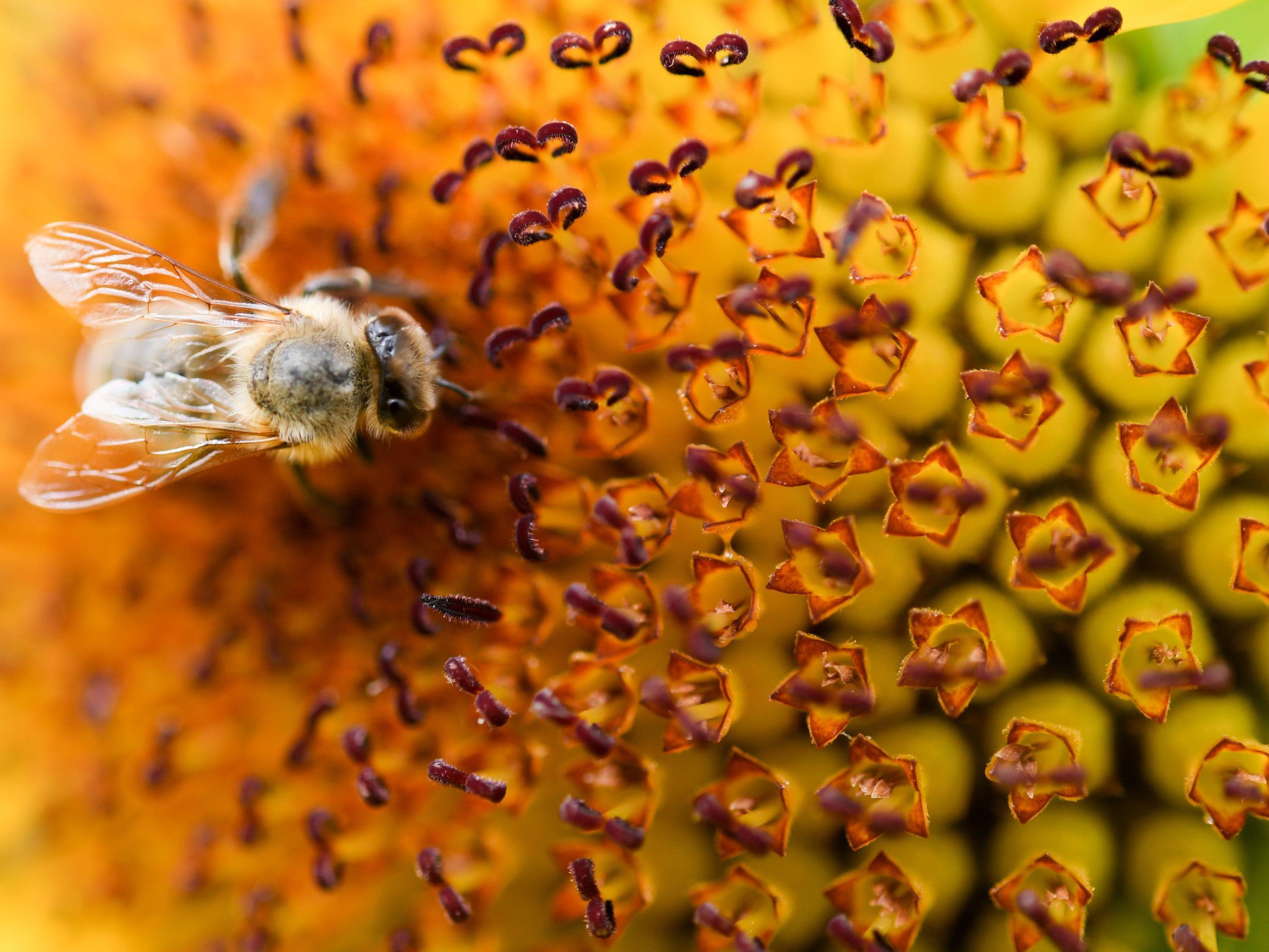 Das Wetter setzte den Honigbienen dieses Jahr hart zu.