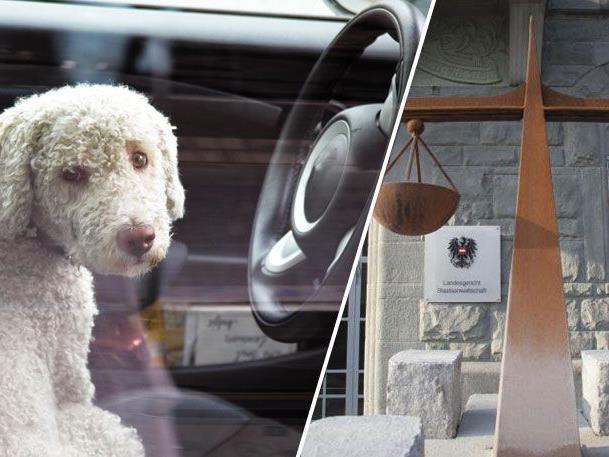 Die mögliche Höchststrafe für Tierquälerei beträgt zwei Jahre Gefängnis