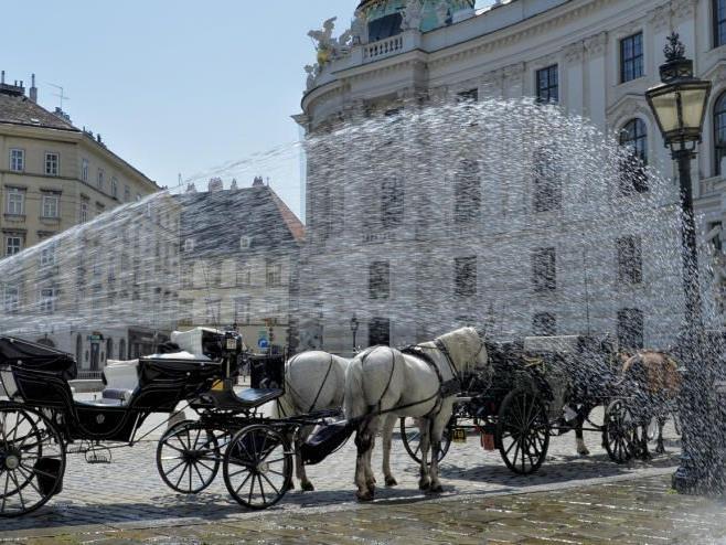 Wiens Touristen sehen den Einsatz von Fiakerpferden bei Hitze kritisch.