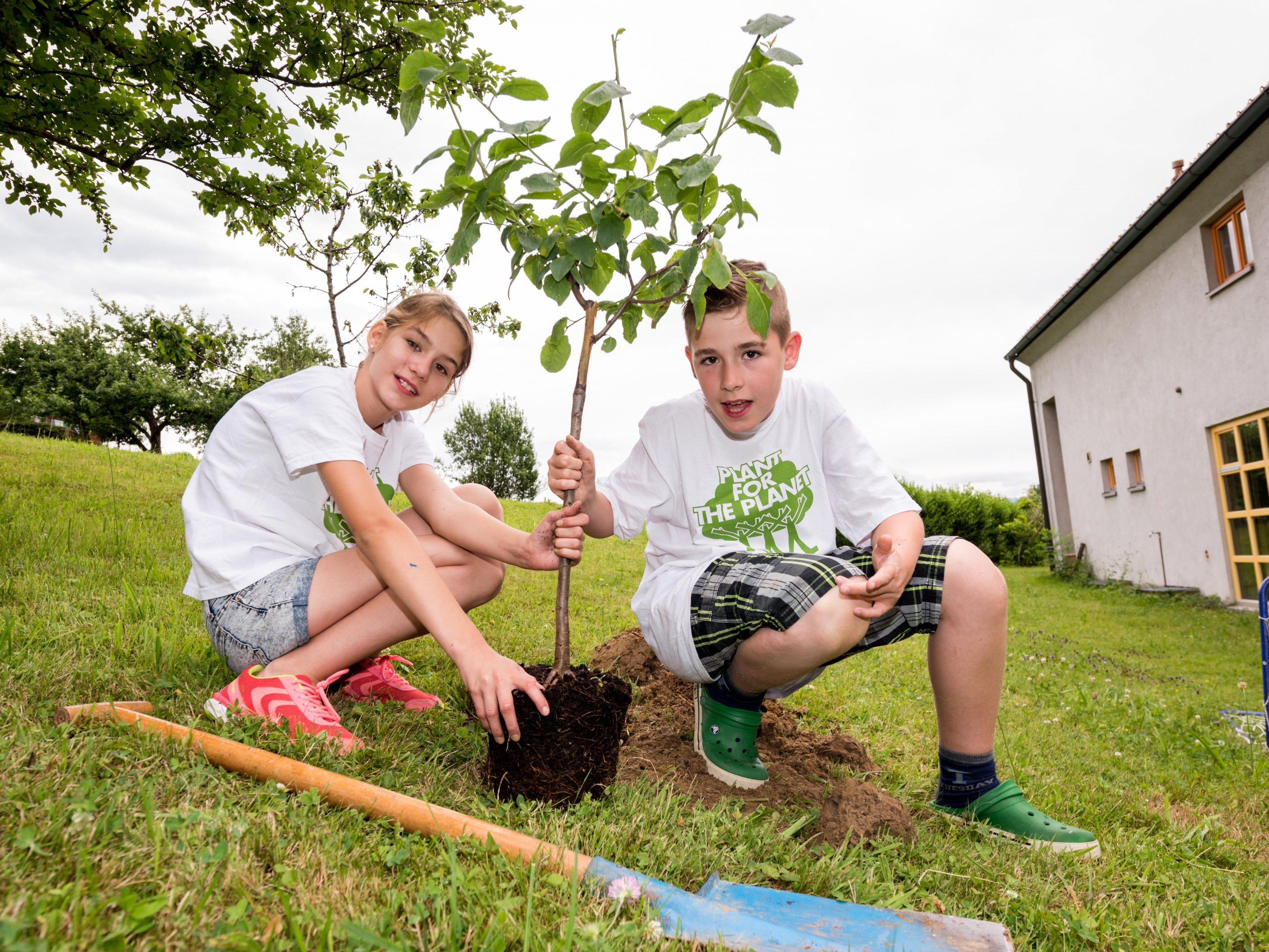 Für Wann & Wo haben die Geschwister einen Baum gepflanzt.