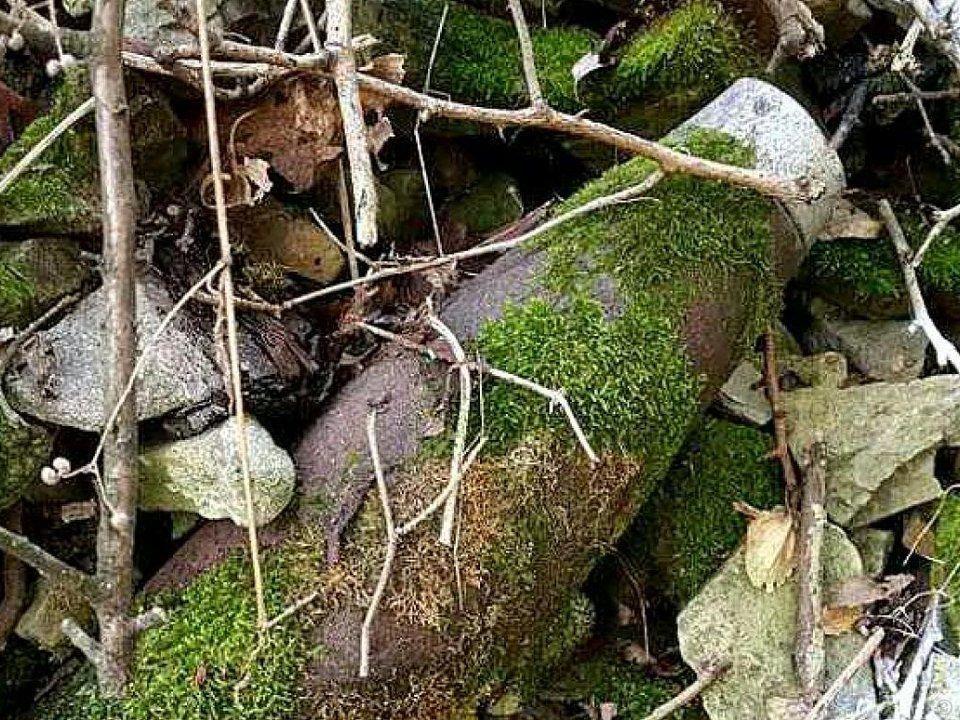 Im Augarten wurde am Donnerstag eine Granate gefunden.